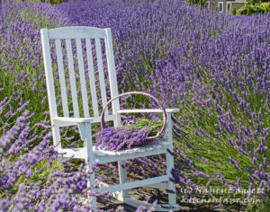 lavenderconnectionchair86472WM_edited-2