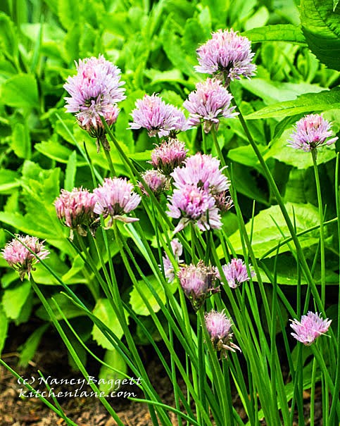 Four Good Reasons to Grow Chives, + Chive & Cheddar Cheese Ball