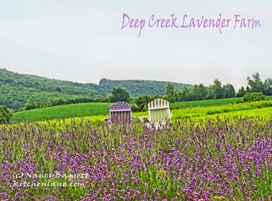 Lavender Fields Forever, + a Lavender-Infused Limoncello